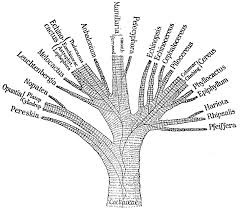 """Phylogenetic Tree"""